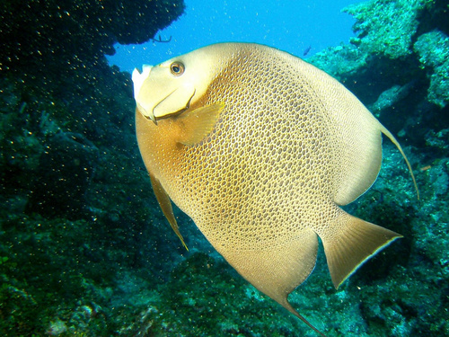 Roatan  Honduras Colorful Fish Diving Cruise Excursion Booking
