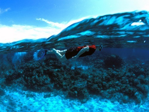Roatan Honduras  Snorkel Cruise Excursion Cost