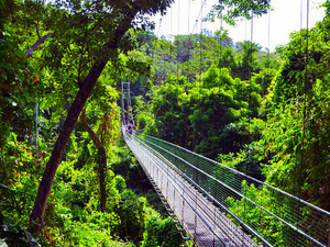 Roatan Jungle Eco Walkway and Treetop Suspension Bridges Excursion