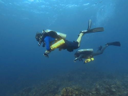 Roatan Mr Bud Diving Cruise Excursion Reservations