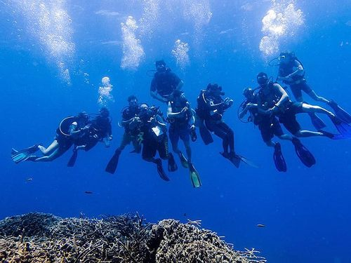 Roatan Prince Albert Diving Excursion Cost