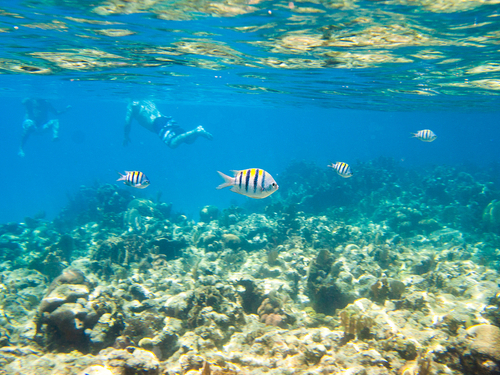 Roatan Snorkeling Snorkel Shore Excursion Reservations