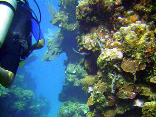 Roatan Swimming Diving Shore Excursion Prices
