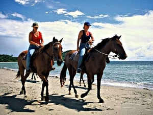 Roatan Ultimate Nature Combo: Mangrove Cruise, Horseback Riding, Beach and Snorkel Excursion