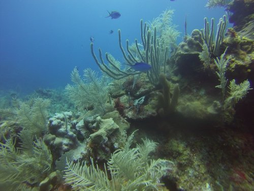 Roatan Underwater Adventure Diving Trip Booking
