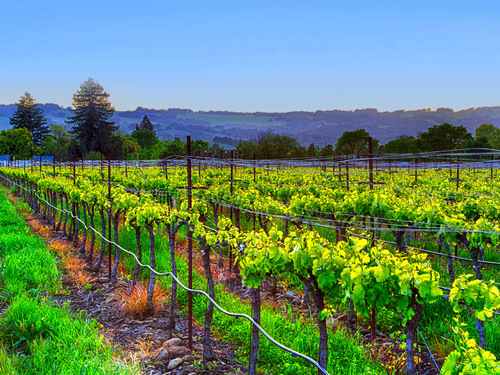 San Francisco vineyards sightseeing Excursion Tickets