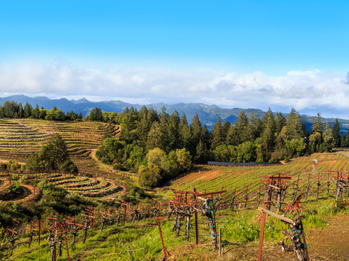 San Francisco sonoma sightseeing Excursion Reservations