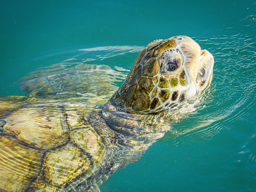 Cayman Islands turtle conservation Tour Prices