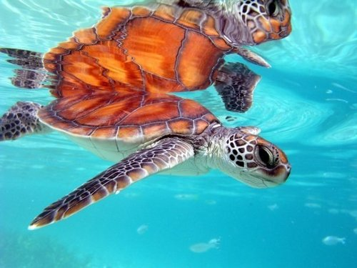 Costa Maya Mexico snorkeling  Tour Prices