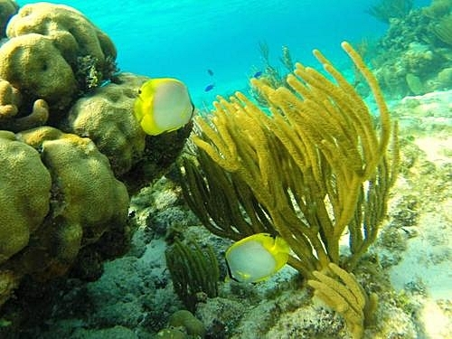 Grand Cayman George Town scuba diving Trip Prices