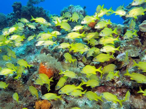 Grand Cayman George Town scuba diving Excursion Reservations