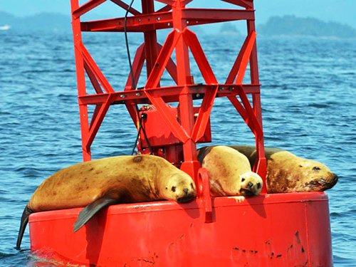 Sitka Seal Sightseeing Trip Tickets