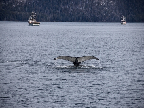 Sitka private whale Cruise Excursion Tickets