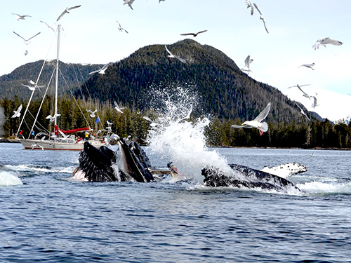 Sitka Orca Sightseeing Tour Cost