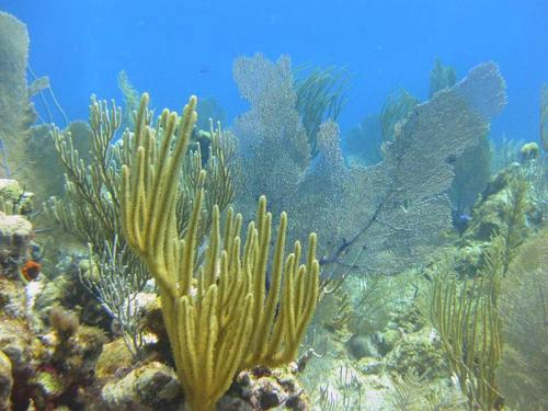 Grand Cayman scuba diving Trip Reviews