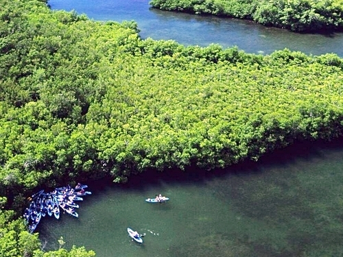 St. Thomas mangrove lagoon Cruise Excursion Reservations