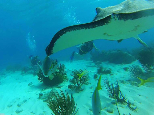 Grand Cayman snorkeling Excursion Reservations