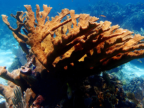 Roatan One Mile Snorkel Excursion Tickets