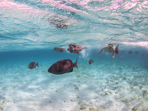 Grand Cayman coral garden reef Excursion Prices