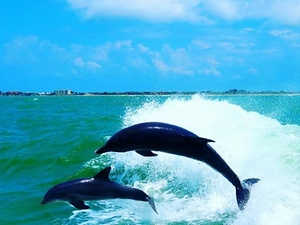 Tampa Dolphin Watching and Buffet Lunch Cruise Excursion