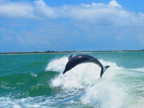 Tampa  US dolphin watching Excursion Tickets