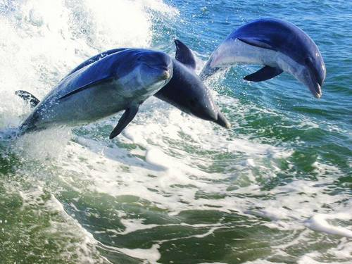 Tampa  US dolphin watching Shore Excursion Reviews