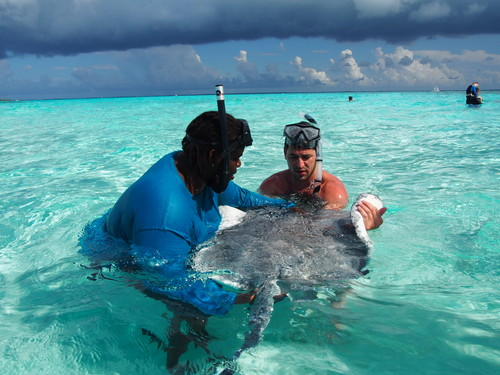 Grand Cayman swimming with stingrays Tour Booking