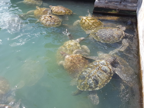 Grand Cayman turtle tank Trip Prices