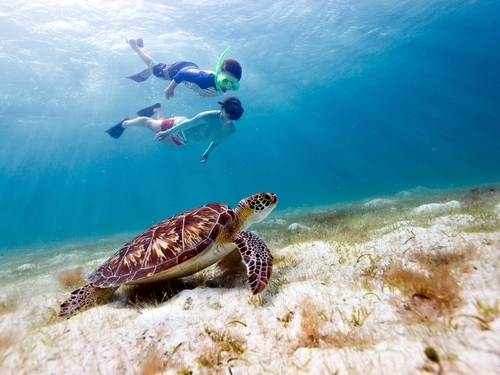 Belize  Belize City sea turtles Tour Reviews