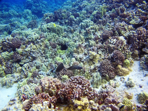 Lahaina reef viewer Tour Reviews