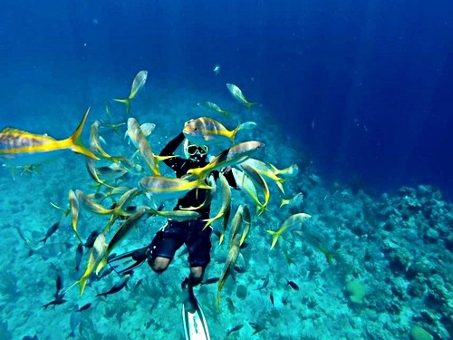 Grand Turk Turks and Caicos wall snorkeling Tour Tickets