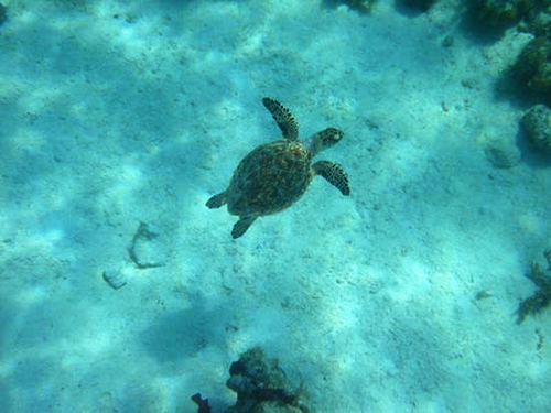 St. Thomas snorkel Cruise Excursion Cost
