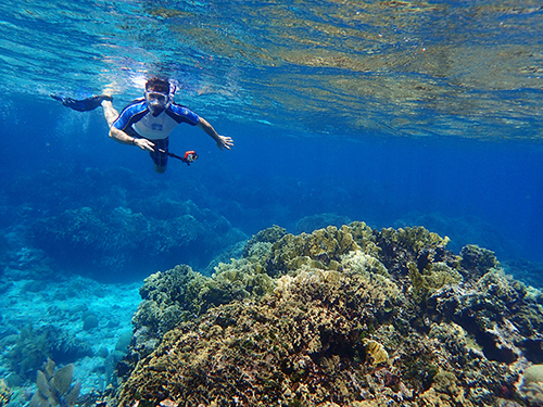 Roatan Southern Reef Snorkel Cruise Excursion Prices